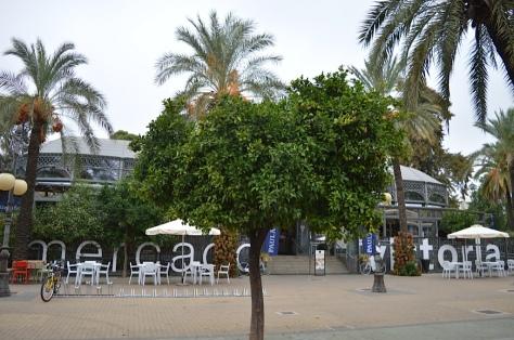 Mercado Victoria