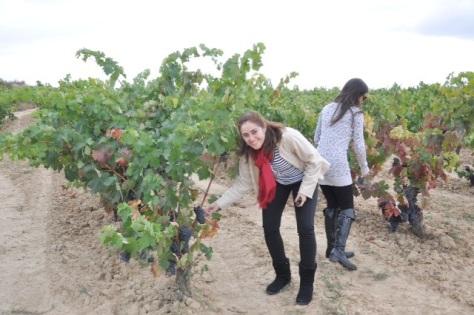 Parreiras em La Rioja