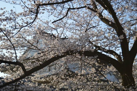 Primavera em Osaka