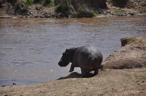 Safari em Massai Mara